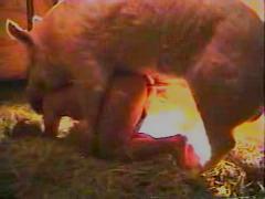 Pig animal porn video